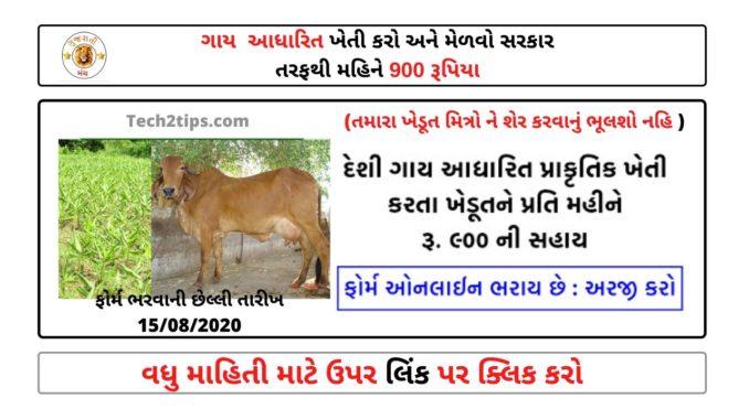 Gay Aadharit Kheti - Got 900 Rs Per Month From Sarkar